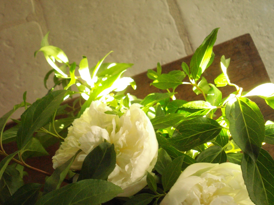 Voir s'ouvrir les PIVOINES BLANCHES (See the ultra romantic white peonies open up)