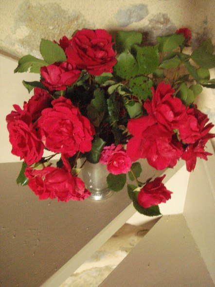 roses rouges (44)