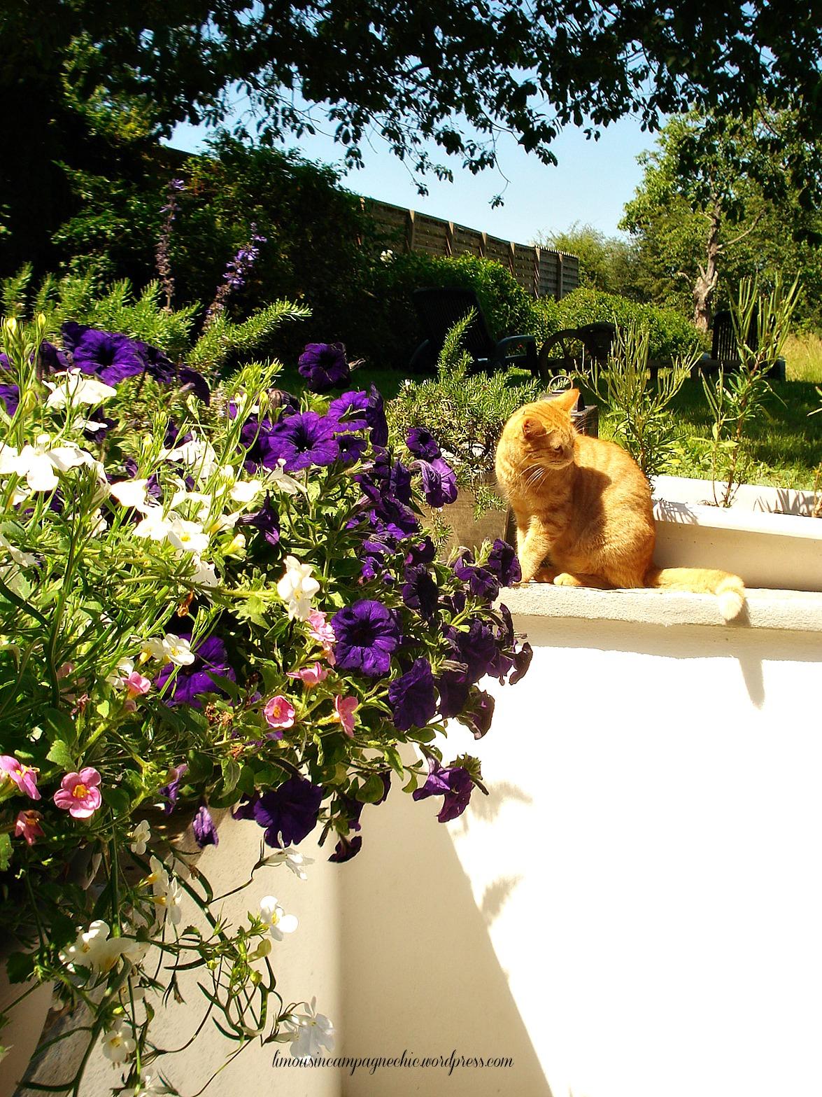 Fleurs terrasse romantiques