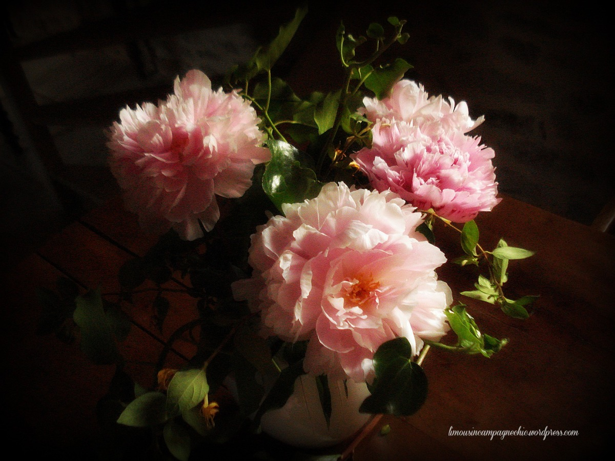 REVE de pivoines ou PIVOINES de rêve (Peonies dream or dream peonies)