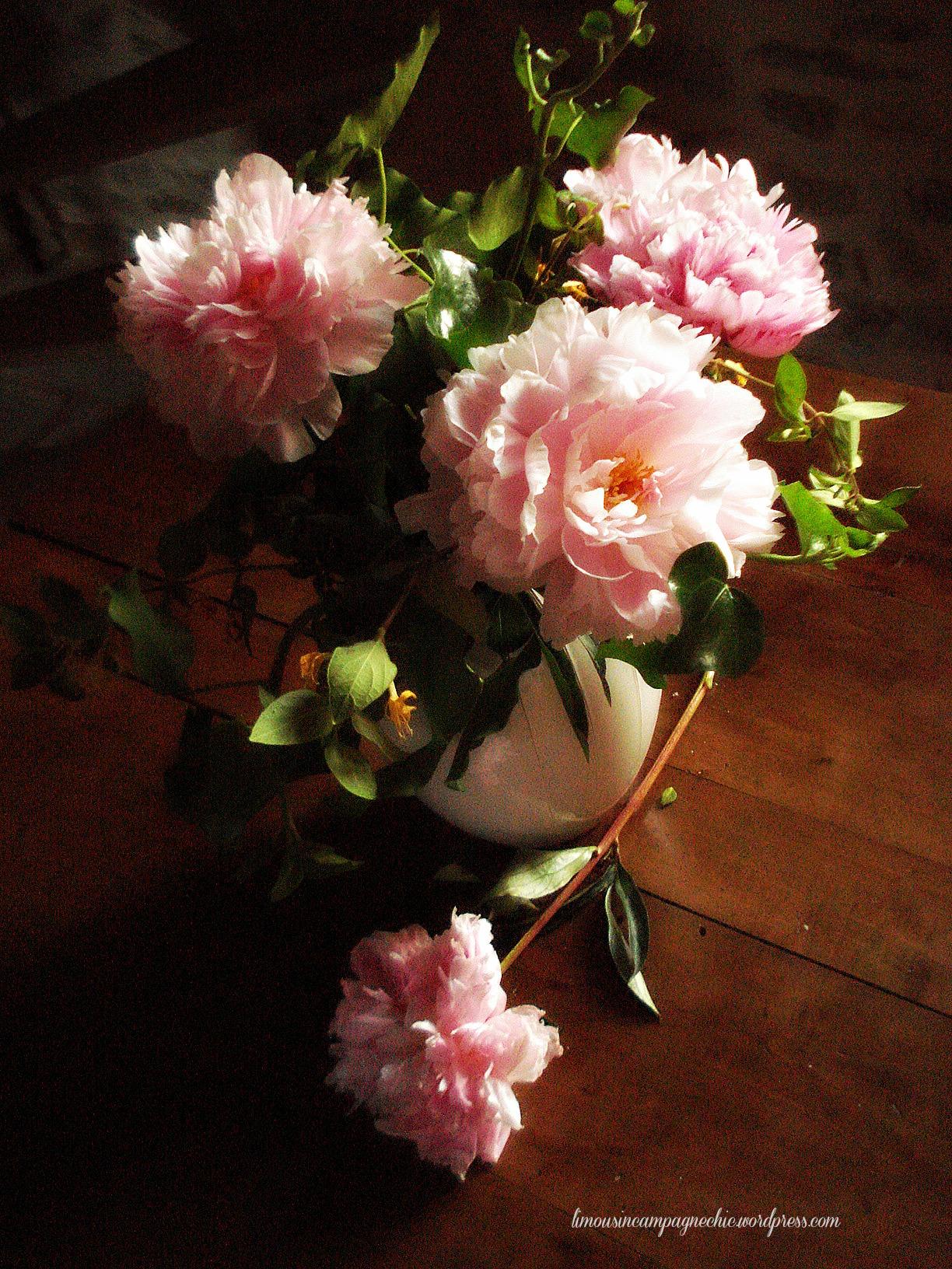 Les pivoines roses du cottage