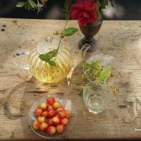 Infusion : une tisane de tilleul frais ? | Herbal tea: a cup of fresh lime tree tea?