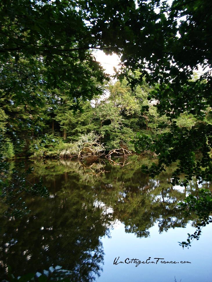 Les arbres dans le lac de Saint Pardoux
