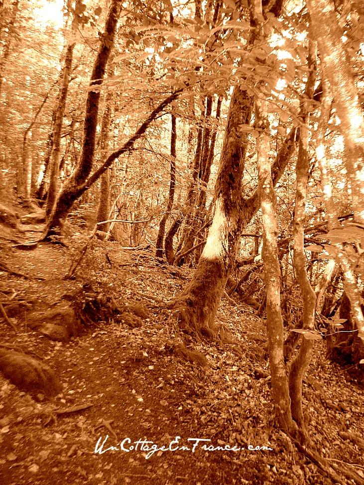 Finissons la promenade dans les bois - Let's go back home