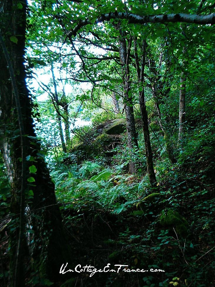 Les coins a champignons Lac de Saint Pardoux en Haute Vienne