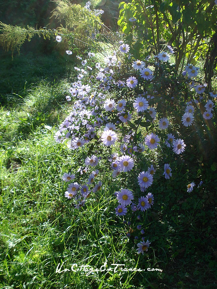 Un Cottage en France - Gerbe d'Asters