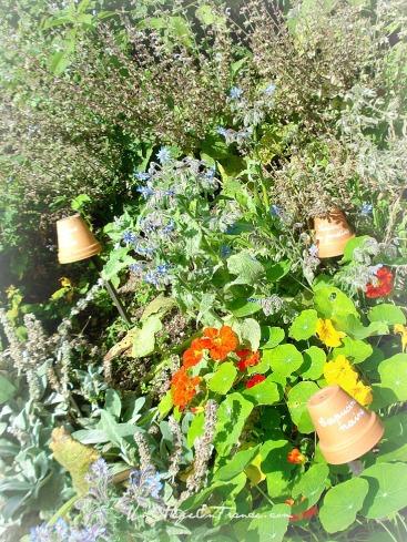 Le jardin de grand-mère 2 Montrol Senard