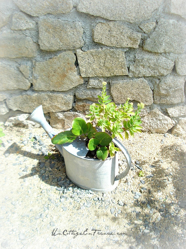 Recycler un vieil arrosoir percé - Recycling the old watering can