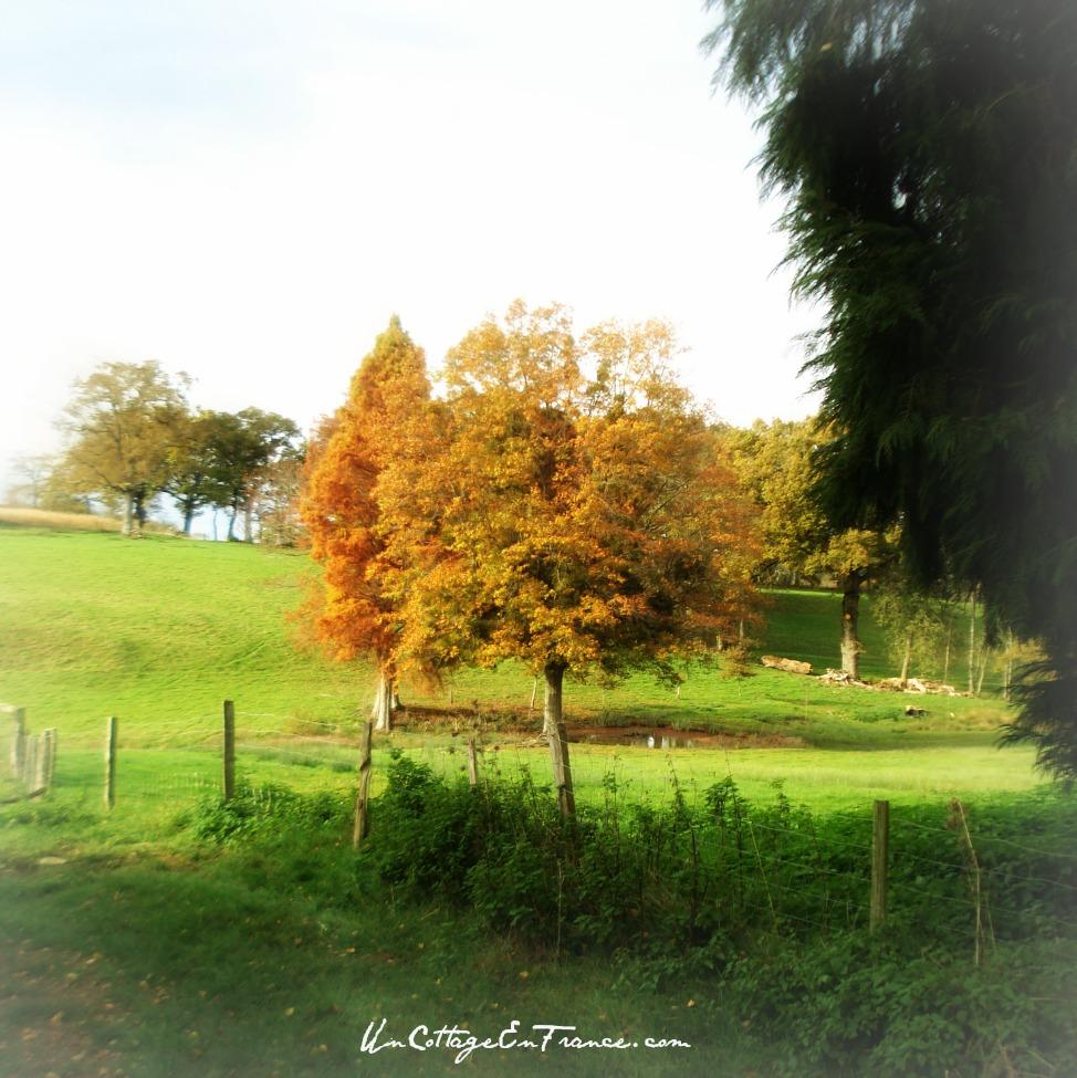 Automne à Lagudet en Limousin 87 France