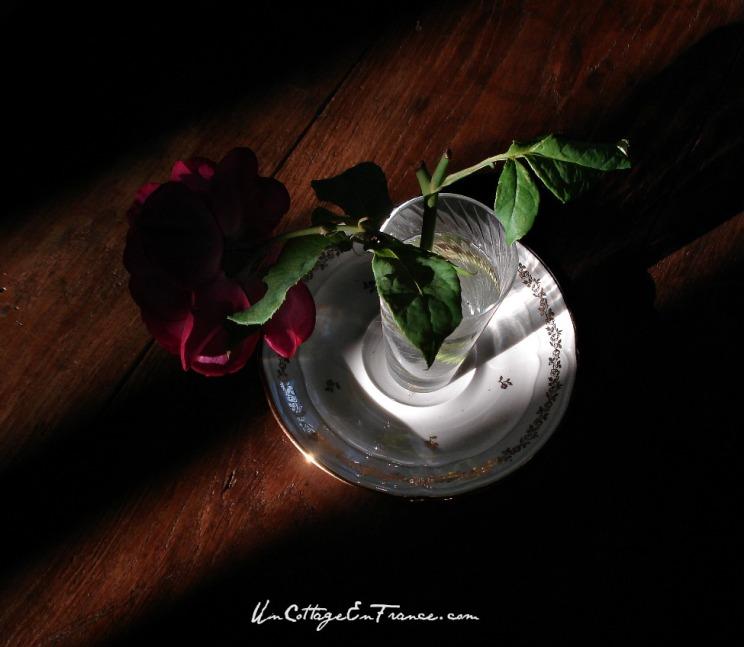 La meilleure rose de cottage