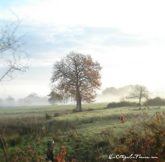 Les chênes du Limousin