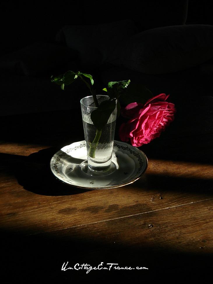 Parfum de Honfleur - Rose au parfum sublime