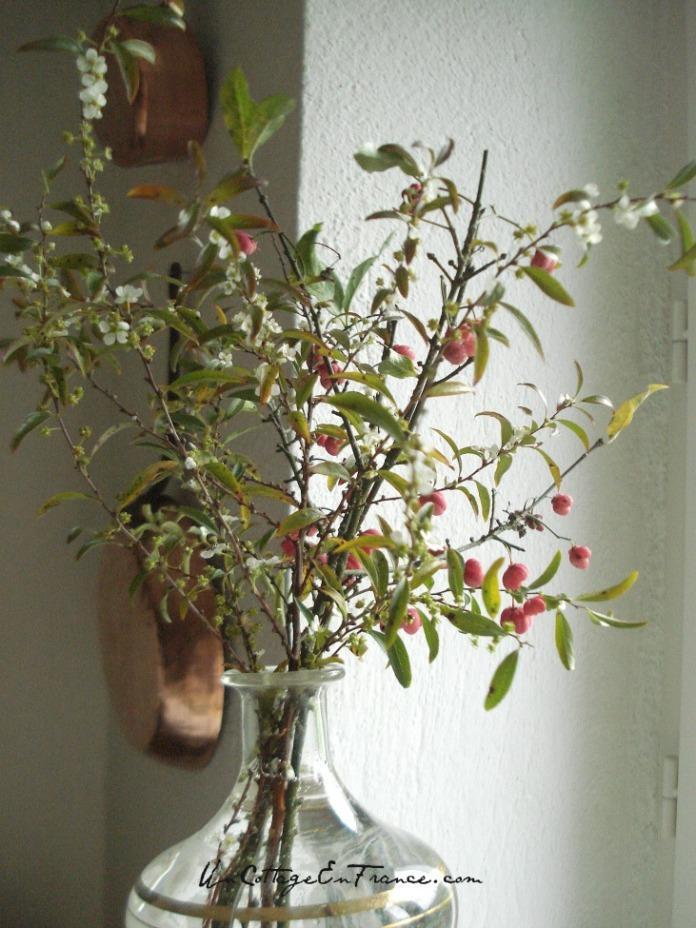 Le bouquet de fusain l'hiver