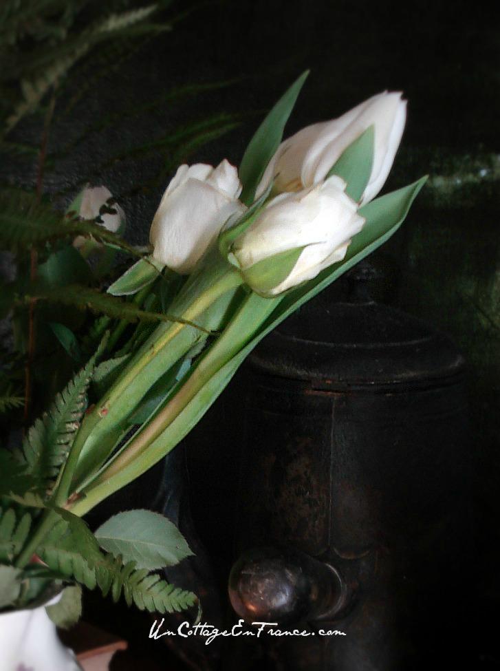 Les tulipes du cottage