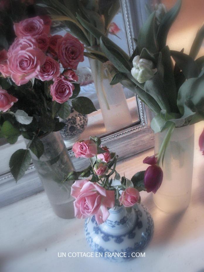 Les tulipes roses de janvier au cottage 2