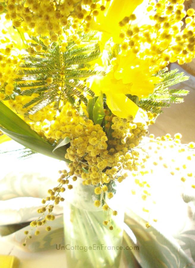 Mimosas et jonquilles