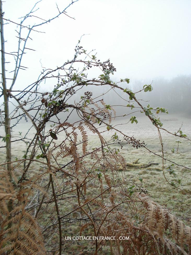 Promenade d'hiver en Limousin