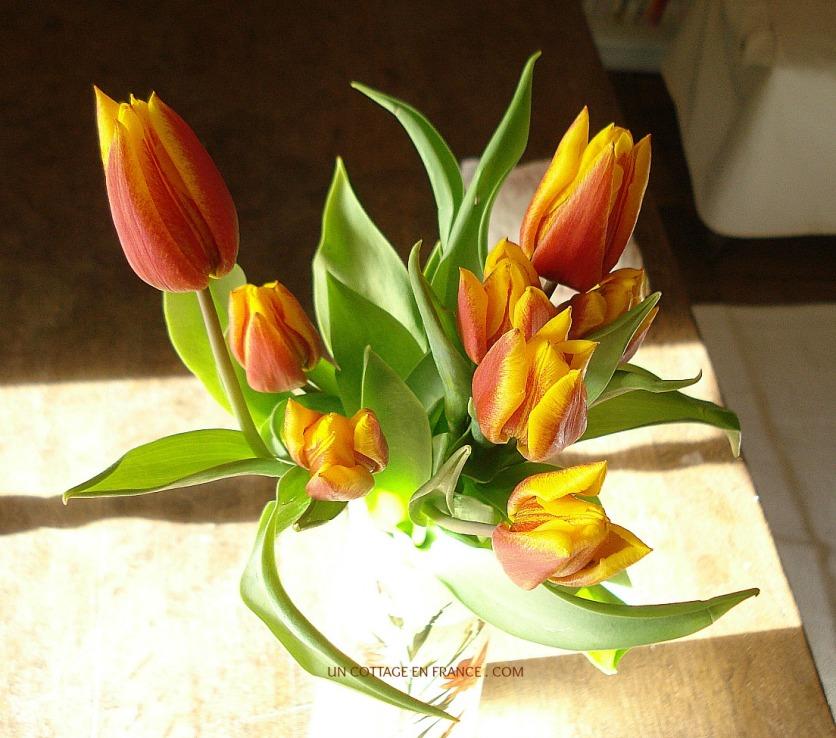 Le tulipes oranges et jaunes du cottage 2