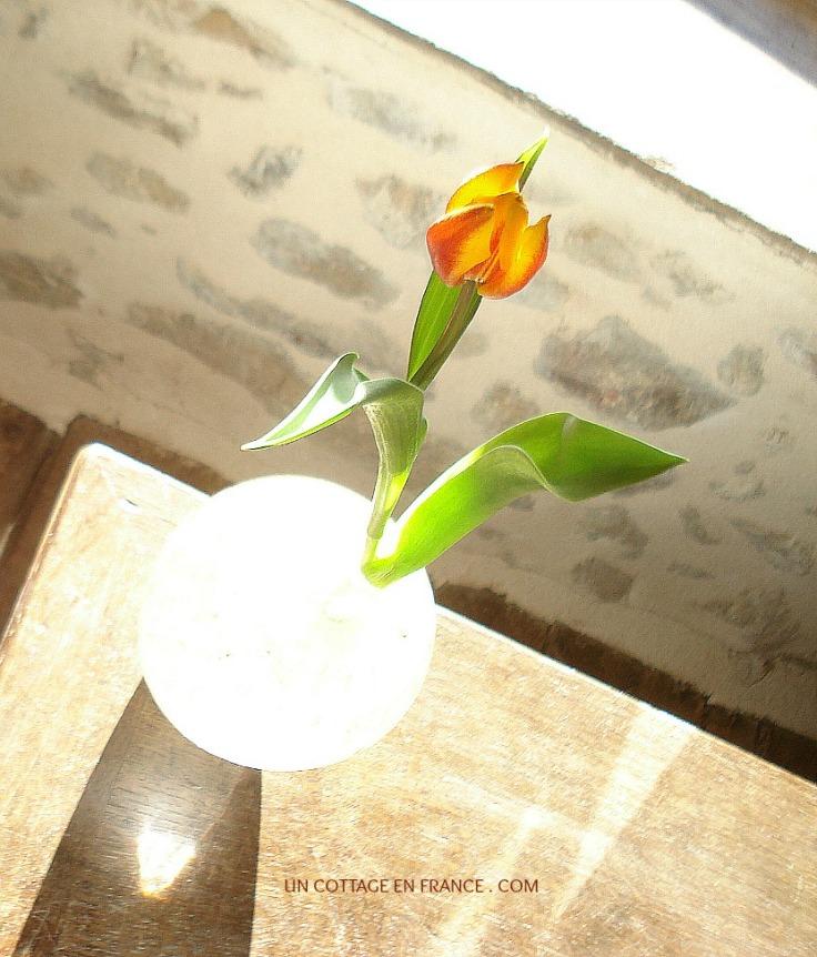 Le tulipes oranges et jaunes du cottage 4