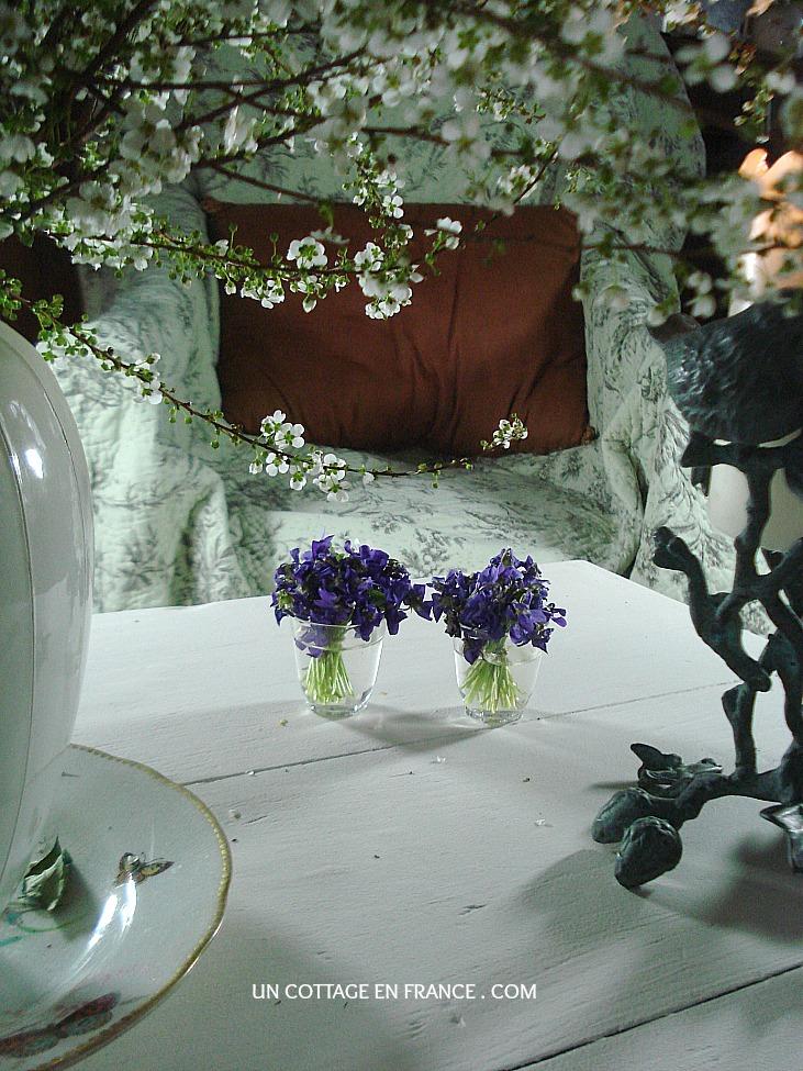 Bouquets de violettes du cottage