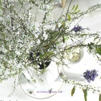 Ambiance de printemps, fleurs BLANCHES et VIOLETTES (White flowers and violets spring feel)