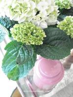 Hortensias nains blancs du printemps au cottage