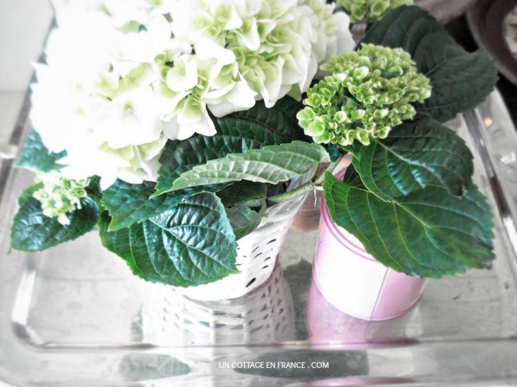 Hydrangeas blanc Un Cottage En France