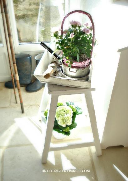 Fraicheur des roses roses cottage 1