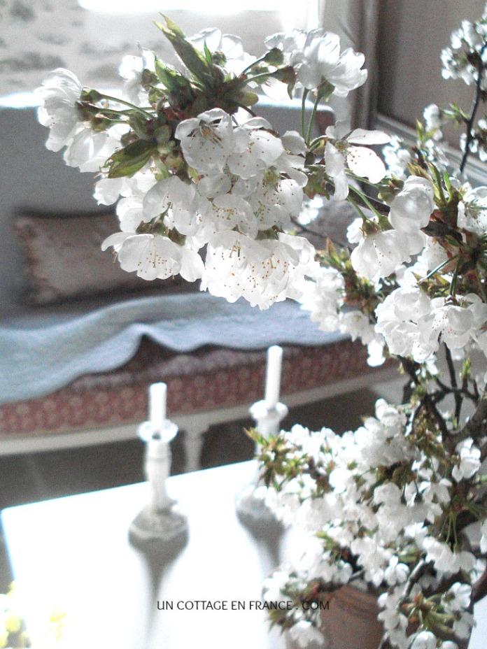 Bouquet de fleurs de cerisiers