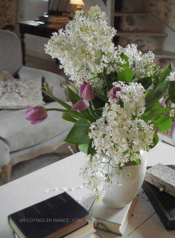 Tulipes mauves et lilas blanc