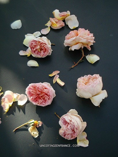 Bohemian French roses