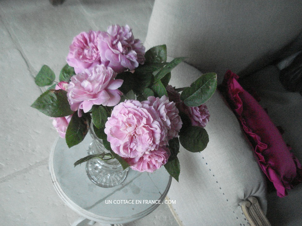Bouquet de roses David Austin
