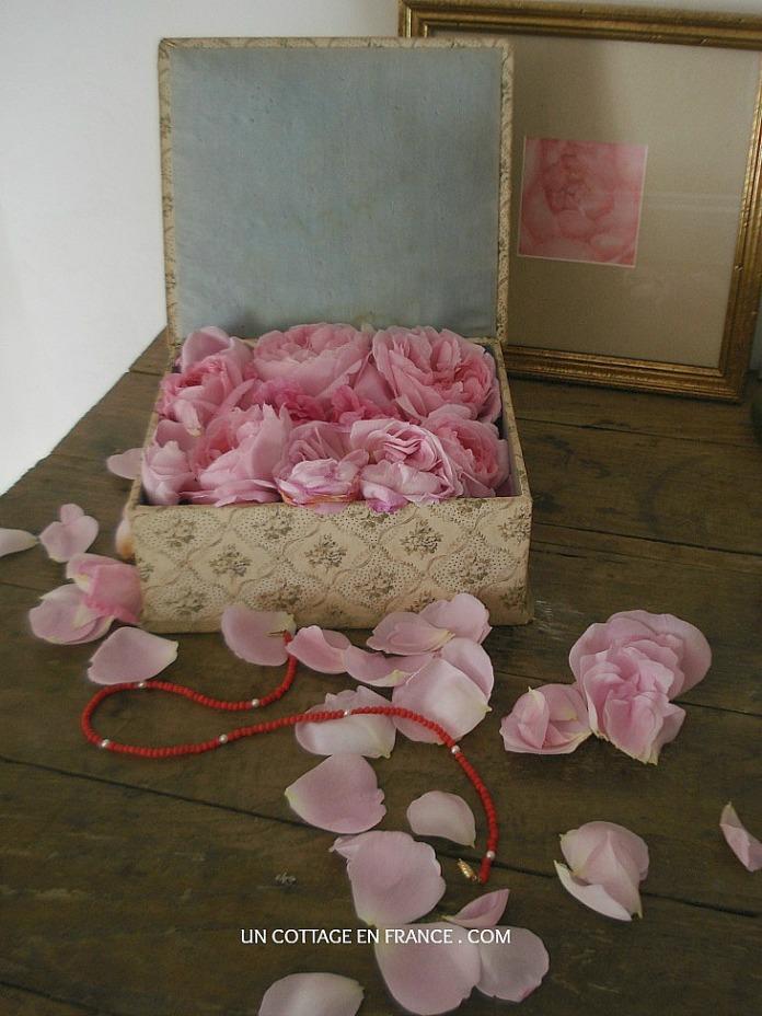 Les roses du cottage en France