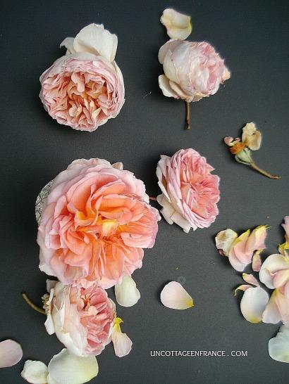 Fantaisie de roses orange