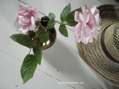 Les roses anglaises du cottage en france