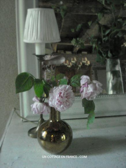 Les roses du cottage rustique