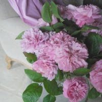 Amour des roses : pourquoi aime-t-on les roses ? | A passion for roses: why do we love roses?