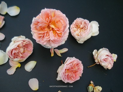 Rose Abraham Darby David