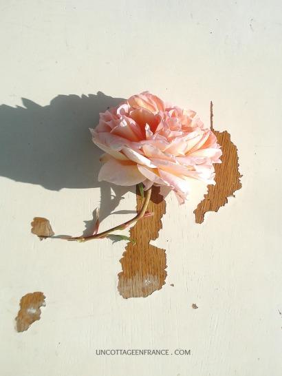 Rose Abraham Darby