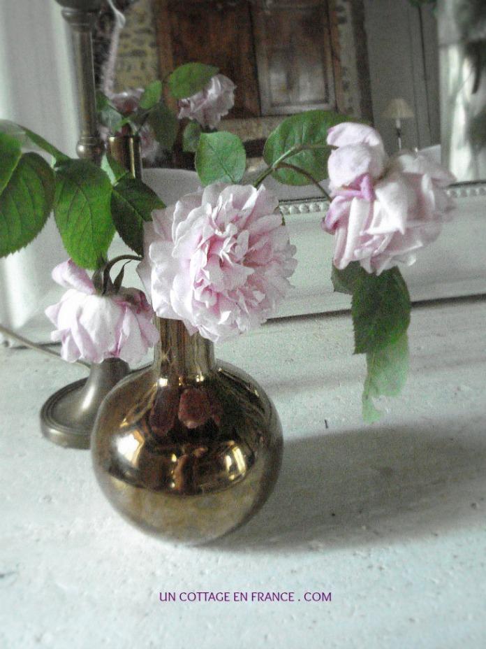Rose de mai Ascension - Cottage en France