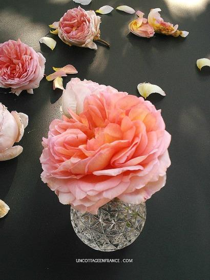 Rose romantique cottage