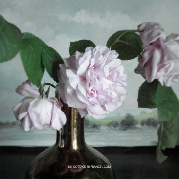 roses pales cottage campagne