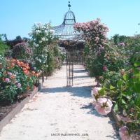 Roseraie  | Rose garden : Doué-la-Fontaine - Maine et Loire