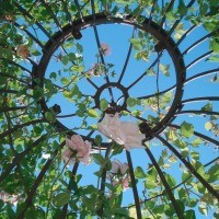 Jardins romantiques : la roseraie de Doué-la-Fontaine | Romantic gardens: Doué-la-Fontaine's rose garden