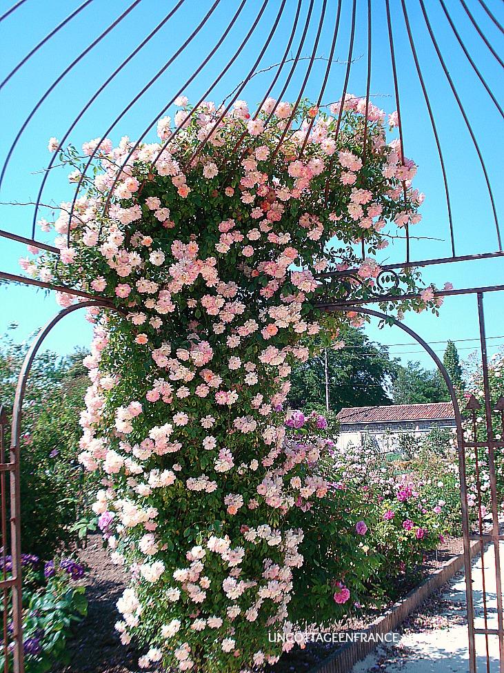 sous la gloriette de la roseraie de Doué la fontaine 1