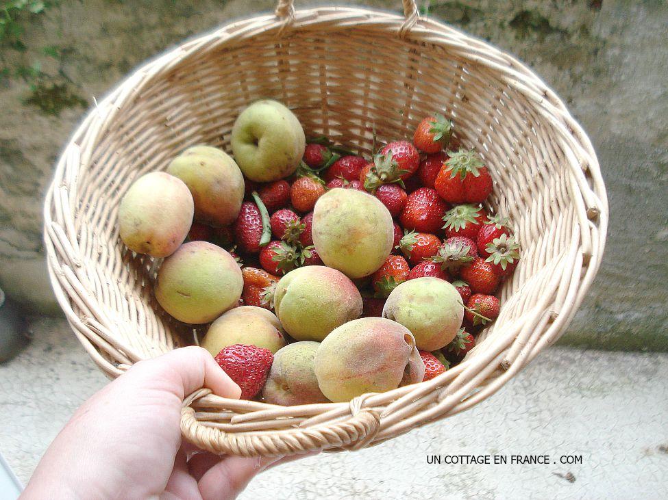 Le panier de fraises et de peches nouvelles