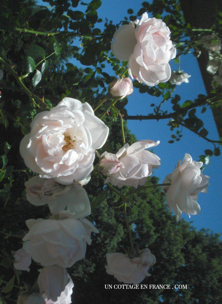 Roseraie de Limoges 5
