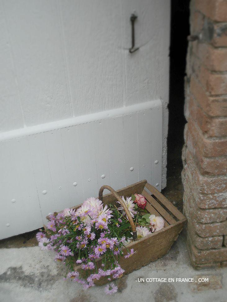 Asters et dahlias devant la porte de la grange fraichement repeinte