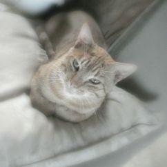Isidore a choisi son coin sur le canapé