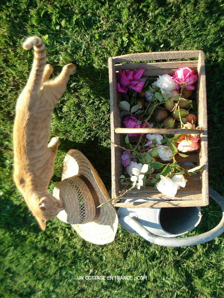 Blog décoration romantique Un Cotage en France